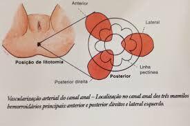 Figura 3 – Plexo hemorroidário interno